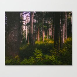 Oregon Forest II Canvas Print