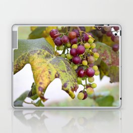 Green and purple grapes on the vine Laptop & iPad Skin