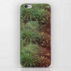 Canarian Jungle iPhone & iPod Skin