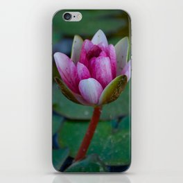 Water Lily 4 iPhone Skin