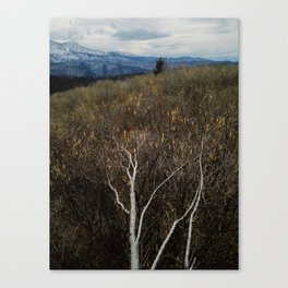 Years without spring Canvas Print