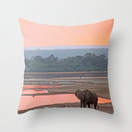 Walk in the evening light, Africa wildlife Throw Pillow