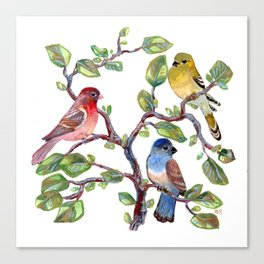 we finches three (two and a bluebird) Canvas Print