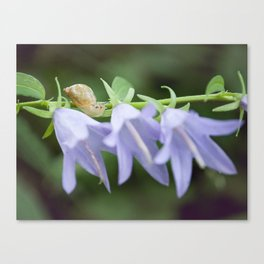 Eli the Snail and the Purple Flowers by Althéa Photo Canvas Print