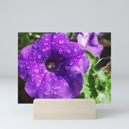 Purple Petunia After The Rain Mini Art Print