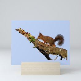 Petit écureuil a trouvé des noisettes.... Mini Art Print