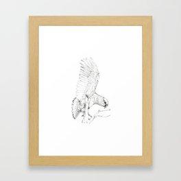 Black Kea Framed Art Print