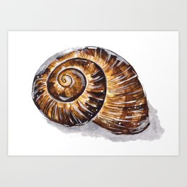 Brown Snail Shell Art Print