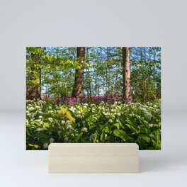 # Spring in the #Forest #colorful #flowers and #Foreground # white # blossoms of the # wild garlic Mini Art Print