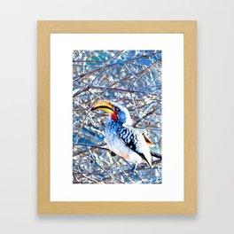 Hornbill Bird in Africa; Vivid Nature Photography from Africa Framed Art Print