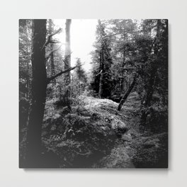 Fall Forest Morning Metal Print