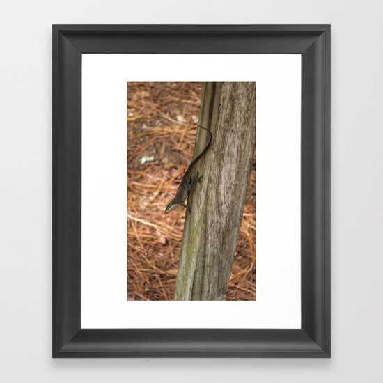 Anole in the pines Framed Art Print