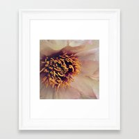 peony Framed Art Prints featuring peony by inourgardentoo