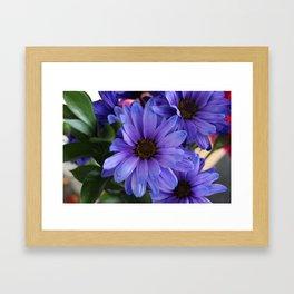 Purple Shaded Daisies Framed Art Print