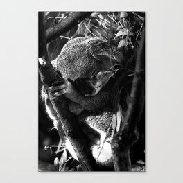 Koala is Sleeping Canvas Print