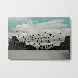 Birds 001 Metal Print