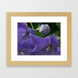 Purple Blooms Framed Art Print