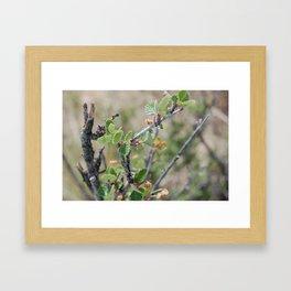 Little Leaves Framed Art Print