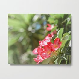 Mighty Sunny Tropical Red Metal Print
