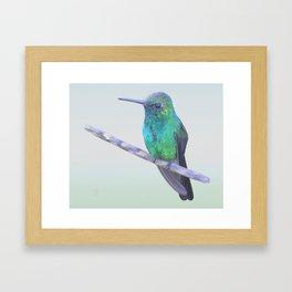 Cuban Emerald Hummingbird Framed Art Print