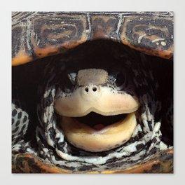 Watercolor Turtle, Diamondback Terrapin 01, Assateague, Virginia, Look Who! Canvas Print