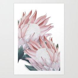 Protea Painting. Pink Protea Print Art Print