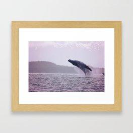 Breaching Humpback Framed Art Print