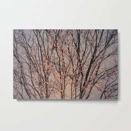 Winter Tree at Sunset Metal Print