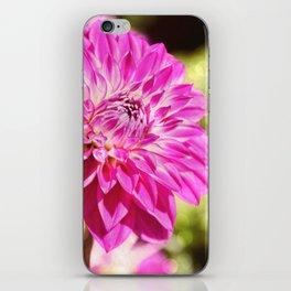 Pink dahlia on shiny day iPhone Skin