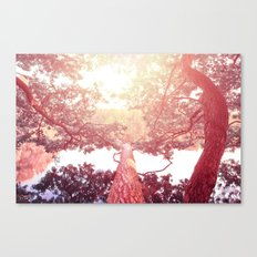 Red woods #trees Canvas Print