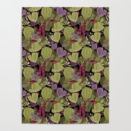 Cacti and succulent Poster