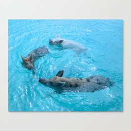 ...and pigs might swim Canvas Print
