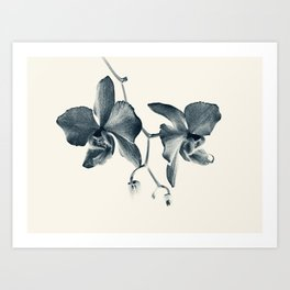 Cyan Orchid #1 Art Print