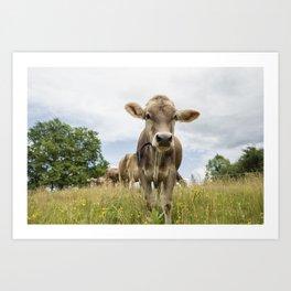 Brown Swiss Heifer Art Print