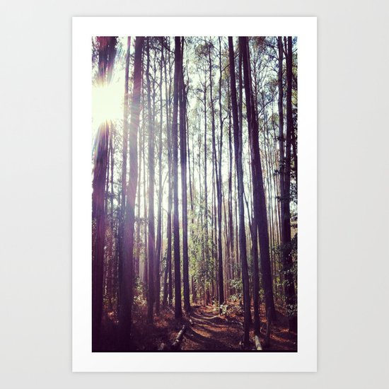 Into the Forest Art Print