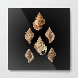 Seashells Biodiversity Illustration Metal Print