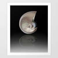 shells Art Prints featuring shells by mark ashkenazi