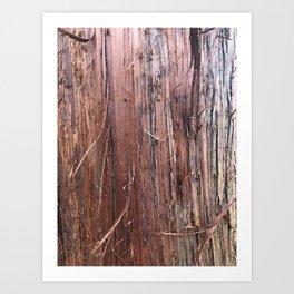 Silver Fir Tree Trunk Abies Alba Art Print