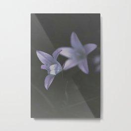 Botanical Still Life Photography Lily Wildflower Metal Print