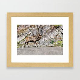 Wapiti Bugling (Bull Elk) Framed Art Print