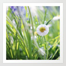 sunny summer meadow Art Print