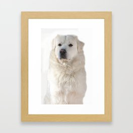 Great Pyrenees dog Framed Art Print