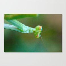 Praying Mantis 5 Canvas Print