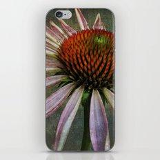 celestial coneflower iPhone & iPod Skin