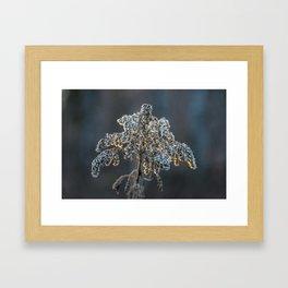 golden rim Framed Art Print
