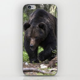 King of forest, male brown bear approaching iPhone Skin