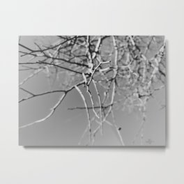 002 | austin Metal Print