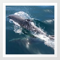 dolphin Art Prints featuring Dolphin by WonderfulDreamPicture