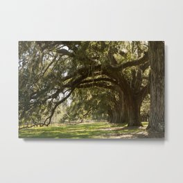 Oak And Moss Metal Print