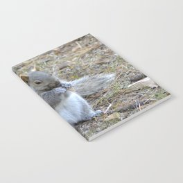 Gray Squirrel Munching on Pine Cones Notebook